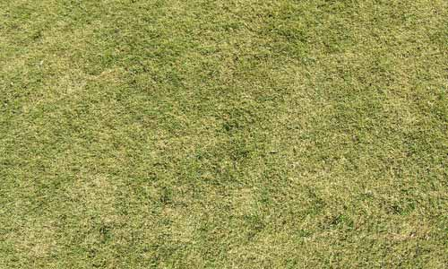 30 Free Grass Texture Collection for Eco-Friendly Designs